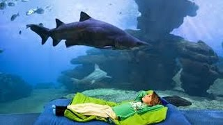 Palma Aquarium Mallorca 4K