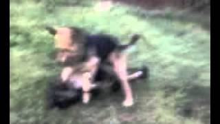 немецкая овчарка против армянский волкодав(, 2013-05-04T13:43:43.000Z)