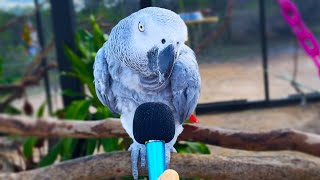 I interviewed animals with a tiny mic 3