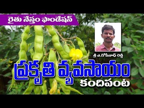 Success story of Redgram Farmer Gopinath reddy (Natural Farming)