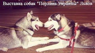 """Выставка собак """"Перлина Украины"""" Львов, Кира, Майа  17.06.2013"""