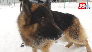 Отряд четвероногих защитников: на страже 2018-го – полицейские собаки
