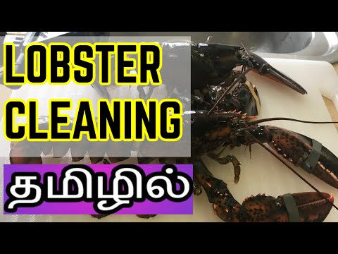 How to Clean LOBSTER _Tamil _Singki Iral Cleaning _ Lobster 🦞 Part 2 _Channel 360*_Chinnaiah