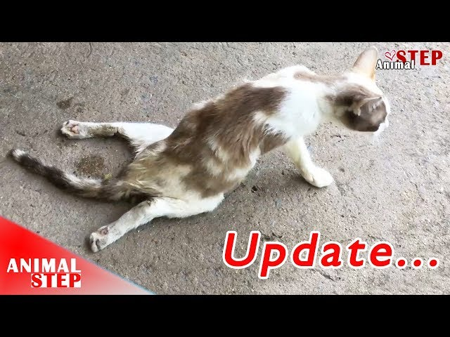 This Paralyzed Cat Is Back to Walk Again, It's an Incredible Recovery