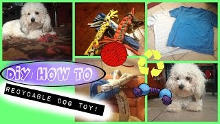 Diy: Recyclable Dog Toy!! (easy!)