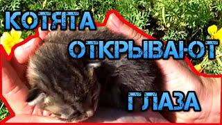 Смешные маленькие котята открывают глаза! История взросления.