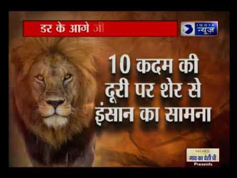 10 कदम की दूरी पर शेर से इंसान का सामना