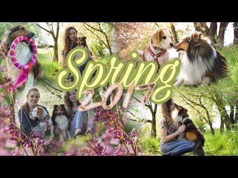 Spring 2017 | Sheltie Bonnie