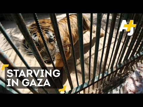 Zoo Animals Are Starving To Death In Gaza