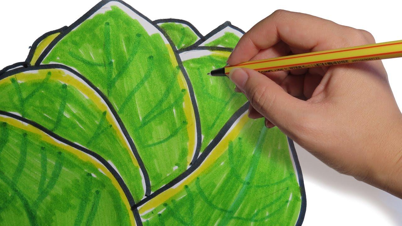 Como dibujar verduras lechuga facil paso a paso youtube for Dormitorio para dibujar facil