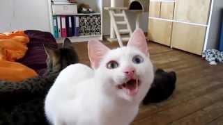 приколы кошки смешные топ 2014 видео смех животные прикольные н