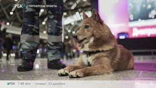 Бизнес-новость. Аэрофлот представил новую породную группу служебных собак