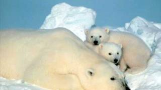 Raekwon ft. Ghostface Killah & Suga Bang Bang- Cold Outside (Polar bears tribute)