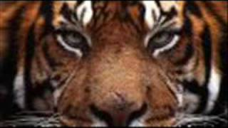 Eye of the tiger music video with lyrics