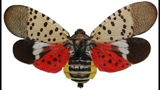 This vicious, tree-killing insect has been found in New Jersey.
