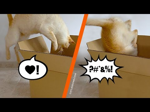 What's Your Cat's Jumping Style?