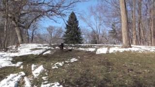 Rottweiler - Safe Exercise (2)