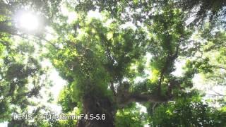 SONY NEX-FS700 Promo Video