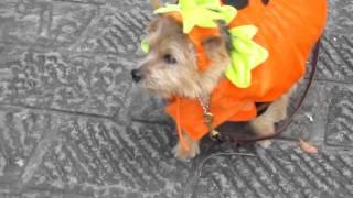 かぼちゃのコスチュームです She is in pumpkin costume.