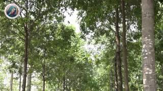 Giây Phút Bên Mẹ - Cs. Phi Nguyễn