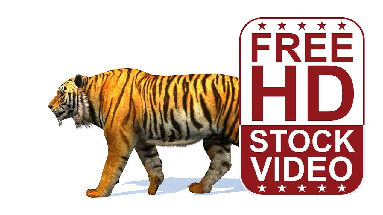 free hd video backgrounds – animal animations tiger walking fast on