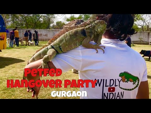 My Iguana and Snowy in Petfed Hangover party 2019 | Wildly Indian