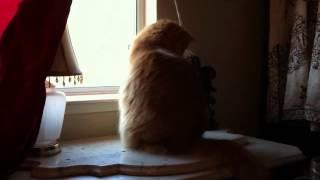Happy International Cat Day 2012