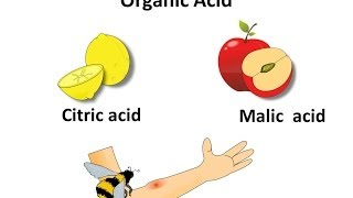 Science - What Are Acid And Base - English
