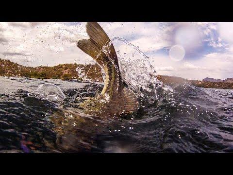 Fishing San Carlos Lake in Arizona with Greg Hines