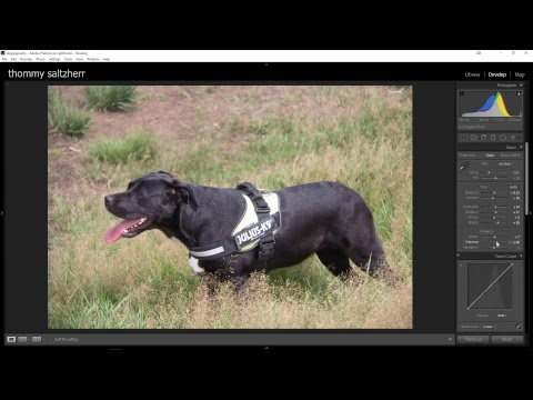 editing dog photo's