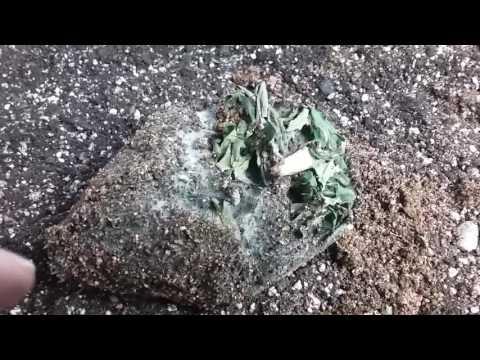 Soil Food Web (Mycelium)