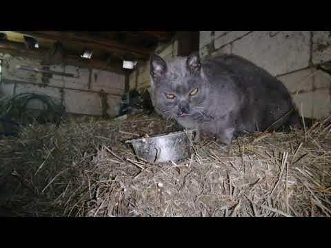 Вопрос: Фунтик, нормальное имя для кота?