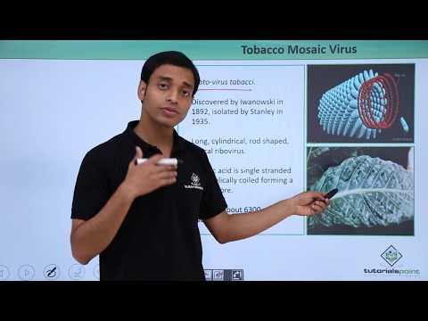 Virus - Tobacco Mosic Virus