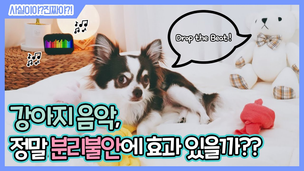 강아지 음악 정말 분리불안에 효과 있을까?┃GO쌤! 사실이야? 진짜야?