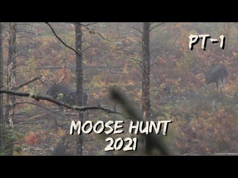 MOOSE HUNT 2021 (PT-1)