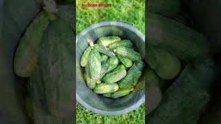 Numesti svorio agurkų gėrimas