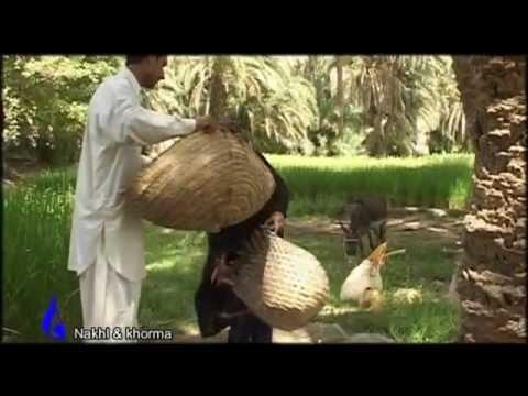 کشاورزی نخل و خرما Palm And Dates Of Iran Youtube