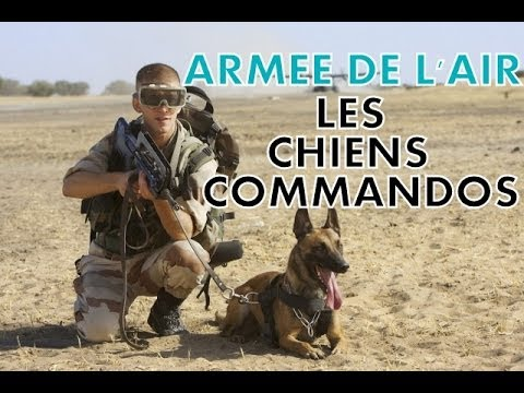 reportage armee de l 39 air les chiens commandos youtube. Black Bedroom Furniture Sets. Home Design Ideas
