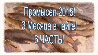 6 Часть . Промысел в тайге 2015! Рыбалка и охота.