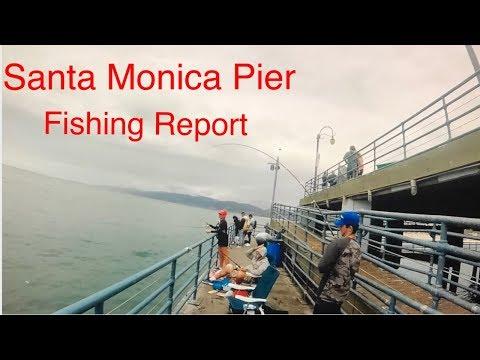Santa Monica Pier Fishing Report