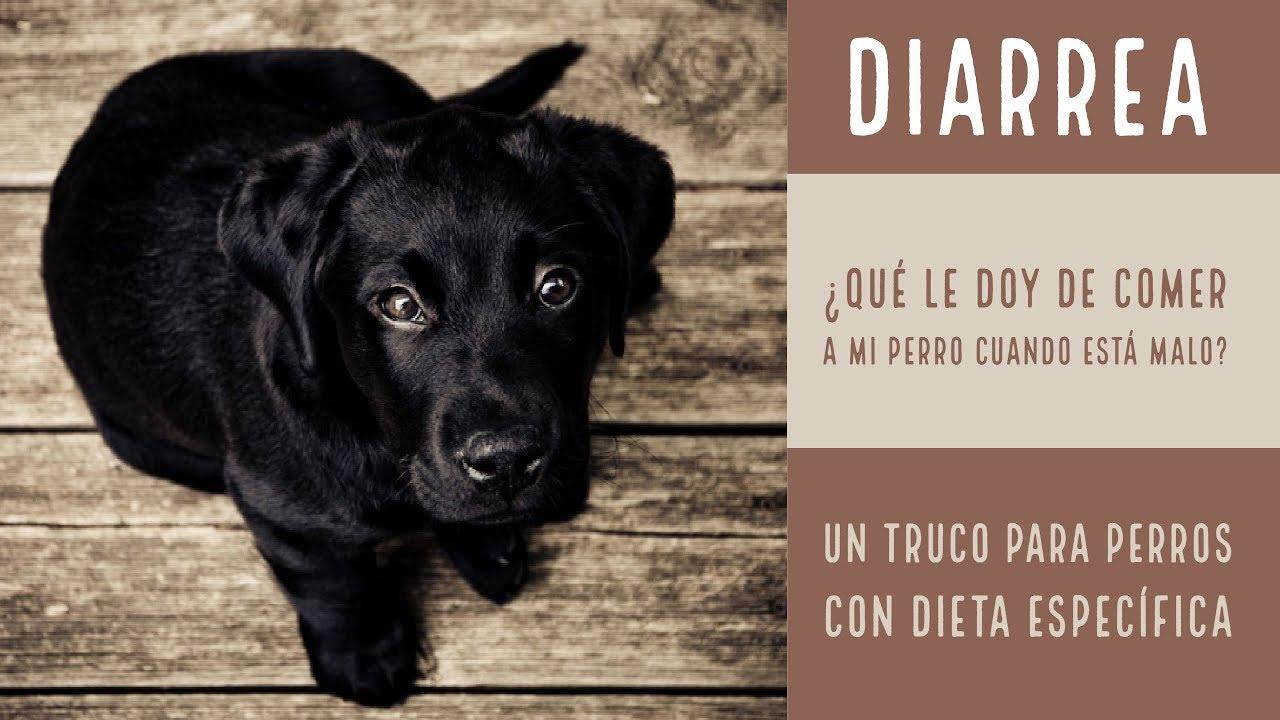 Alimentos para perro dieta blanda