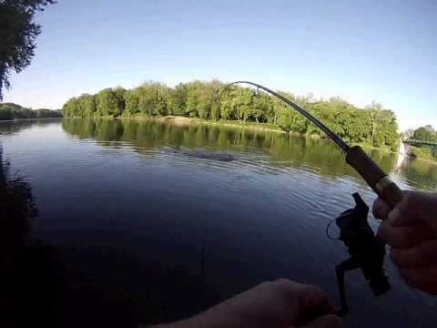 NJ Shad Fishing With Ken Beam On The Delaware River - Shad Fishing In NJ!