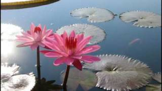 A Water lily - Jia Peng Fang ( Piano )