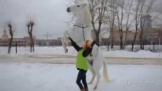 Мастер- классы по дрессуре и общению с лошадью на свободе от Яны Шаниковой