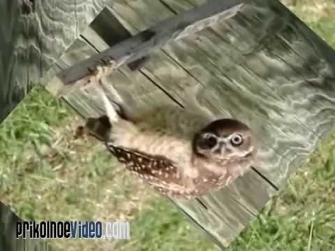 Прикольные птицы: смешные птицы видео, приколы с птицами