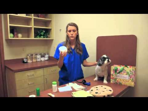 Create a Pet First Aid Kit