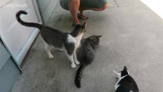 Training Feral Cats With Cat Treats thumbnail