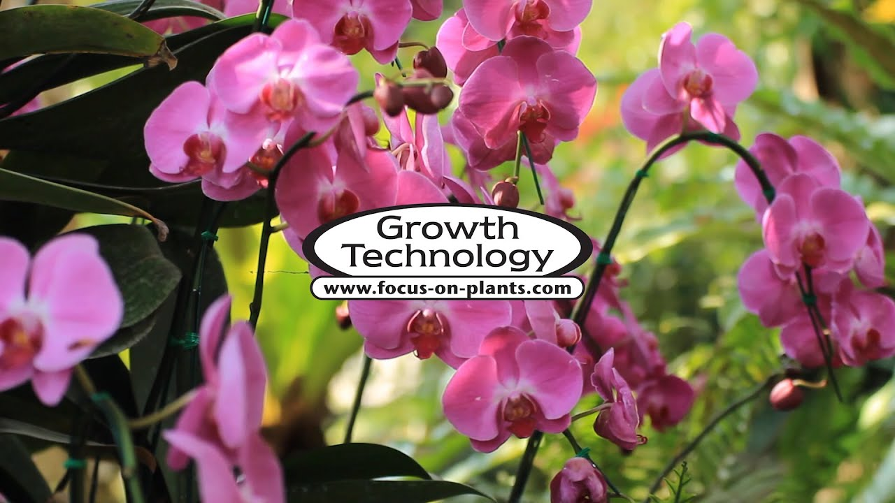 Growth Technology Orchid Focus Repotting mix 3 lts