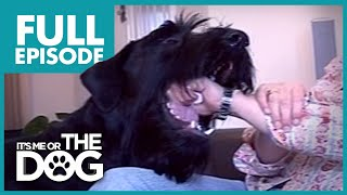 The Clumsiest Show Dog: Bailey   Full Episode   It's Me or the Dog