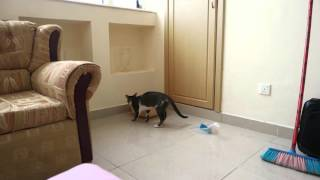 Mimi the Cat not sure where the toilet is: Digging tiles near litter box! 4K UHD